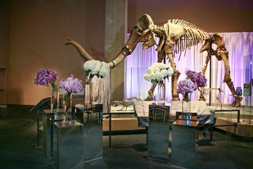 Draping wedding Perot Museum