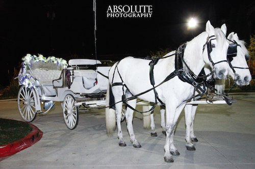 Wedding White Horse and Carriage